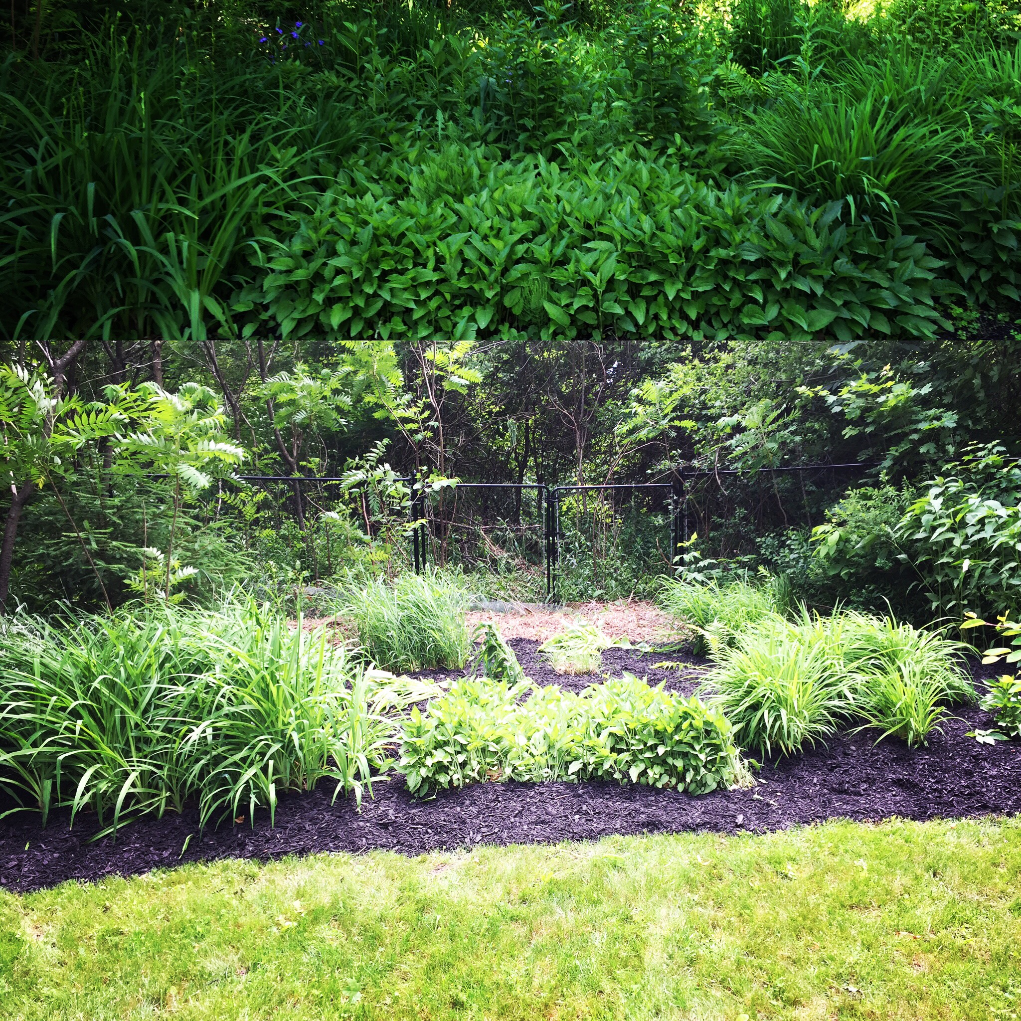 Overgrowth removal and mulching