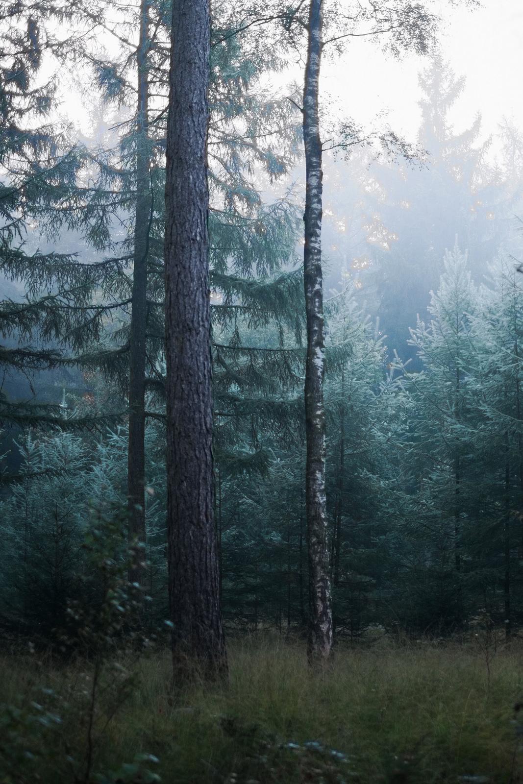 90377 :      Green and beautiful  by Robert-Paul Jansen