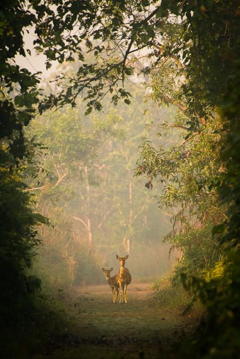 afineredge :     Enchanted forest.