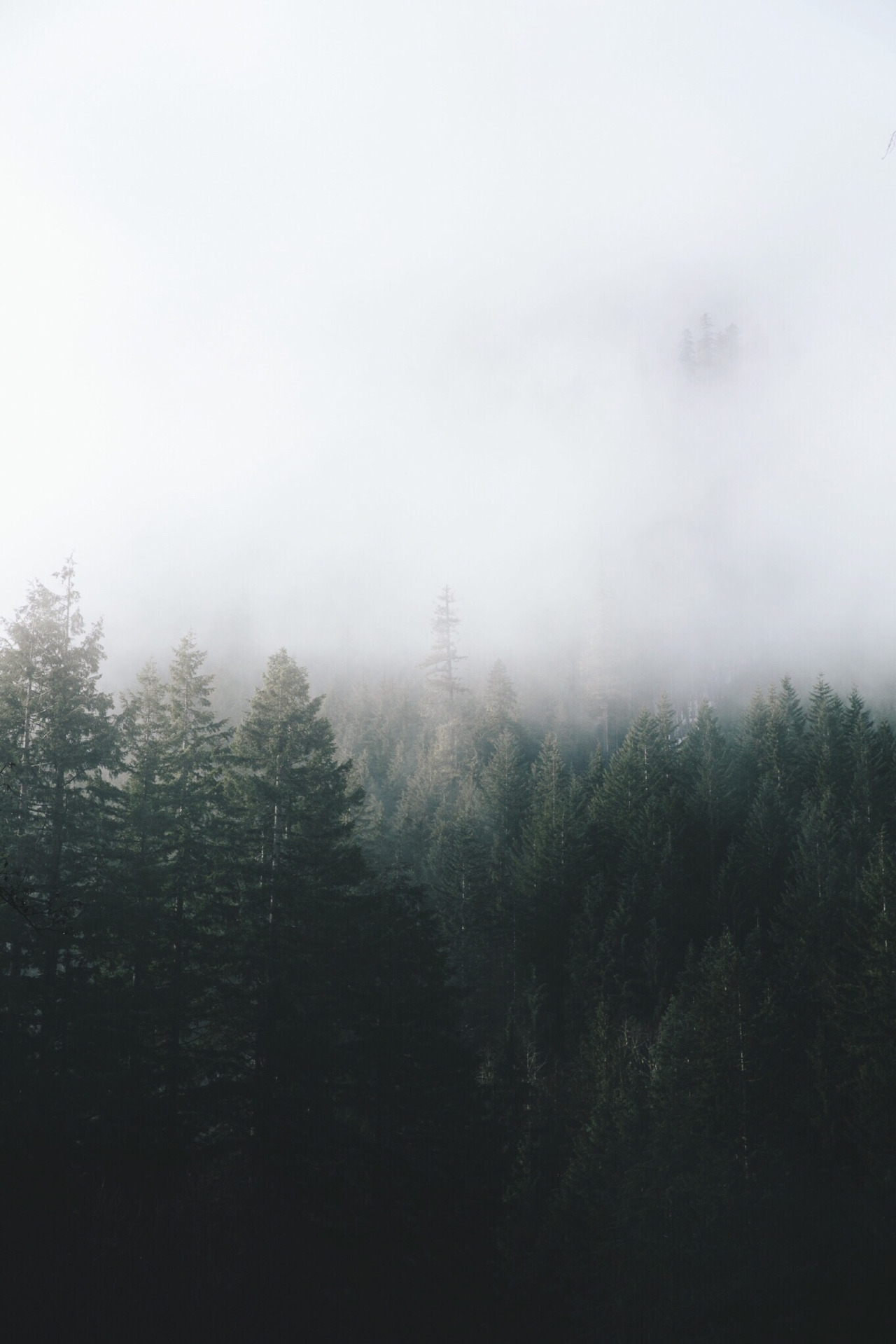 nickcarnera :     Hidden trees