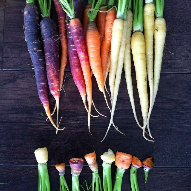 justinetaylor :     Our farmer's market treasures didn't all make it home. #bunniesinthebackseat