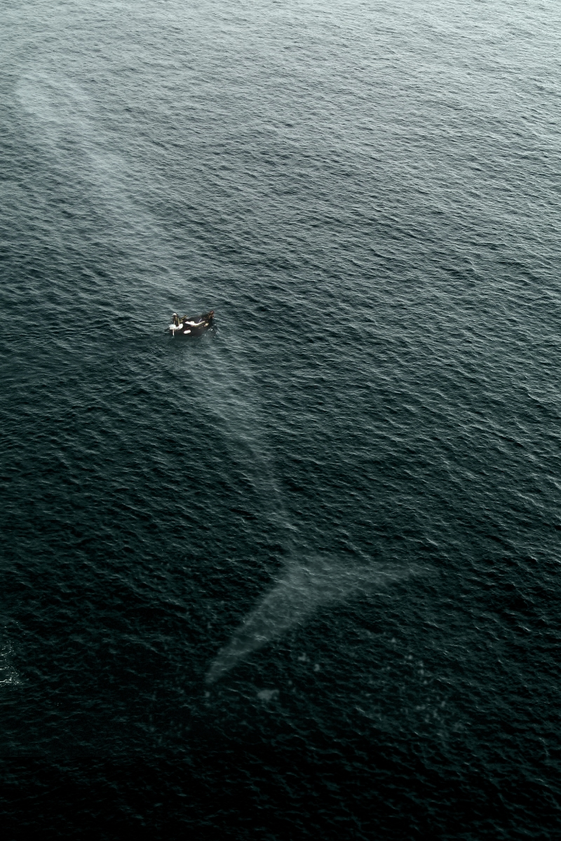 vistale :     You're never alone in the ocean.