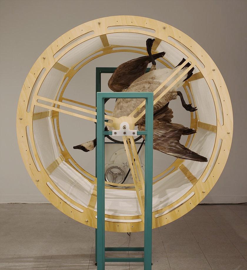 David McDougall,  Machined Migration , wood, steel, HDPE Plastic, fabric,taxidermied canada goose, electronics, 120cmx90cmx170cm 2017