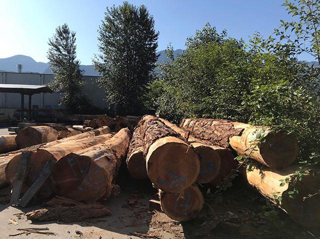 Big crush this week. Yard full of logs. #Fir #vanurbantimber