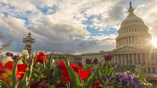 Capital Hill in the spring
