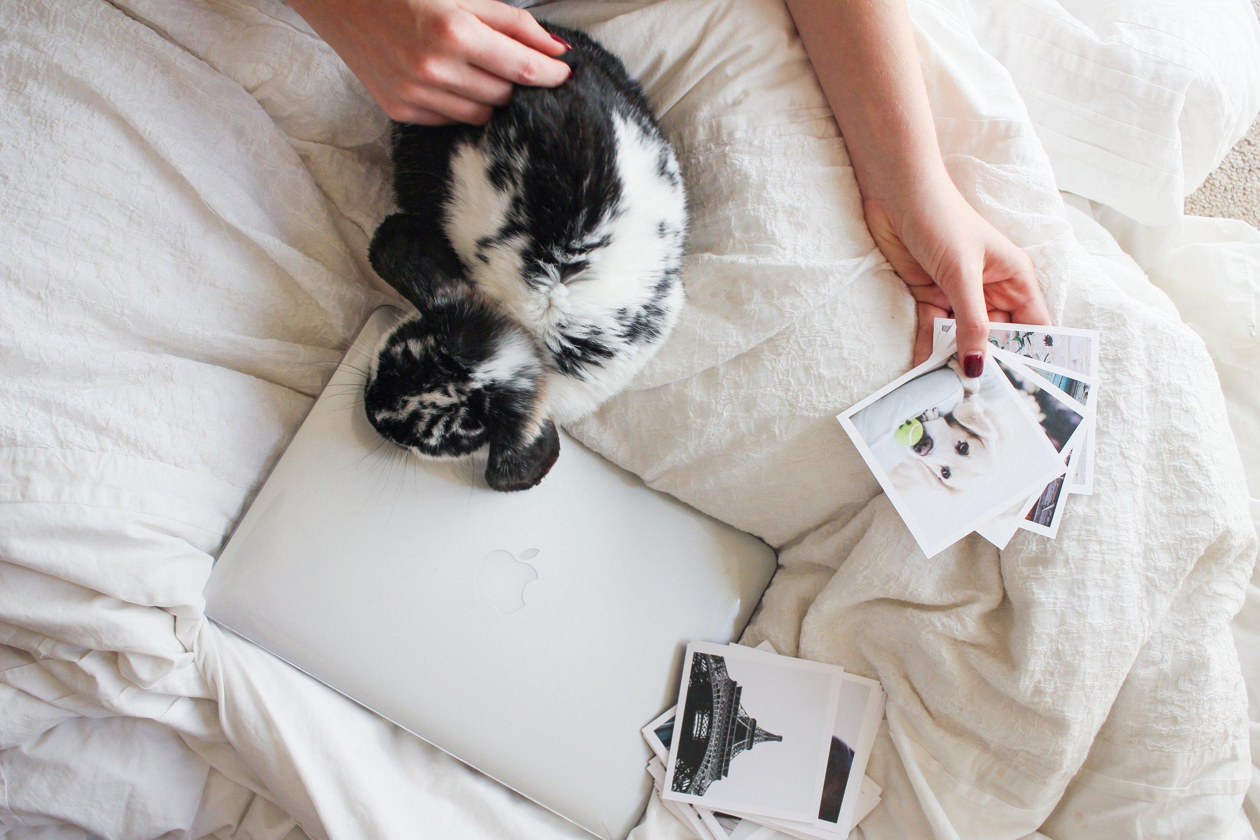 4: Bunnies -