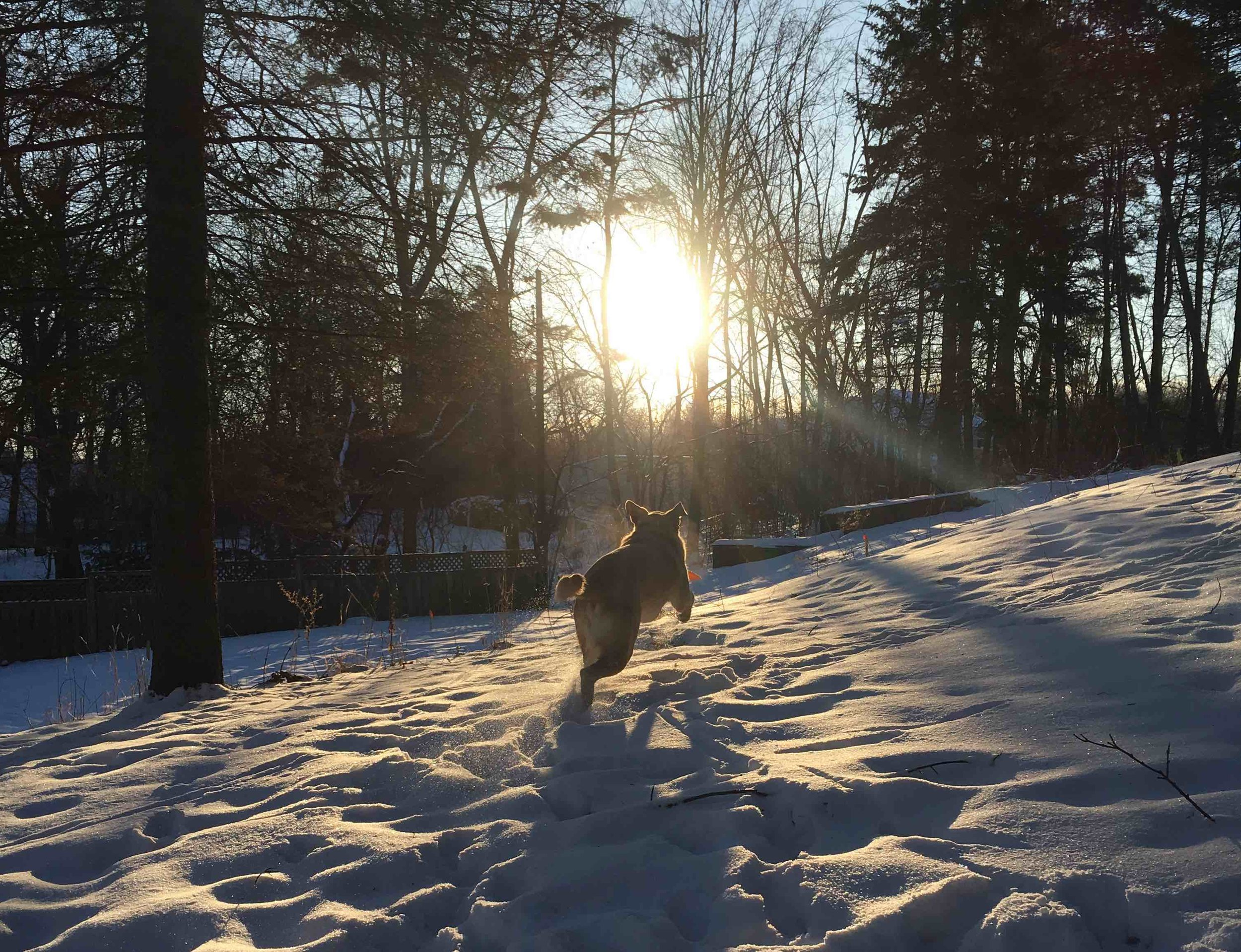 3: Seeing the joy your dog finds in bounding through the snow -