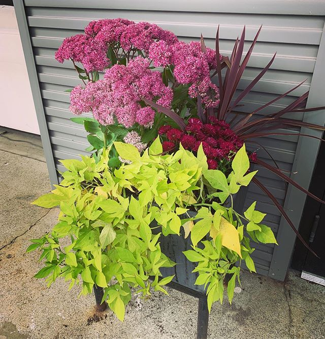 We can't believe we've made THE switch... fall flowers in the planters! We are open today from 12-5pm. This also means we are open again on Sundays. Hope everyone has a lovely Labor Day!