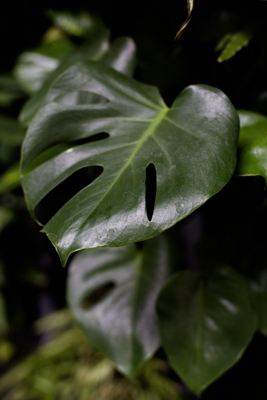 Modern Romantic Jungle Styled Shoot at The Woodshed-Bridal Shoot-0023.jpg