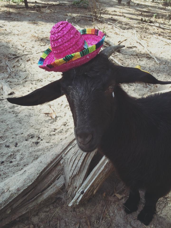 Goats in Hats - Señorita Emmaline.jpg