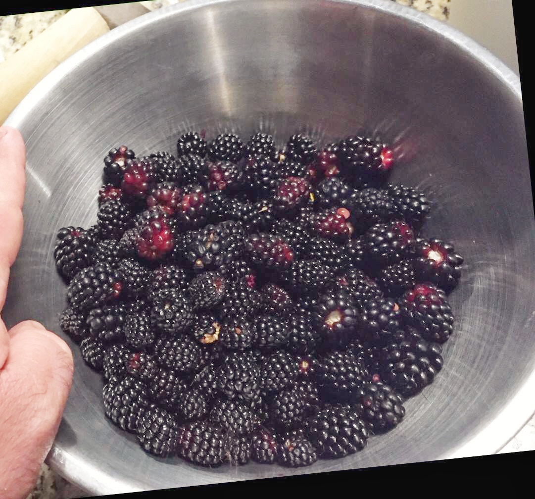 Medders Family Blackberries.jpg