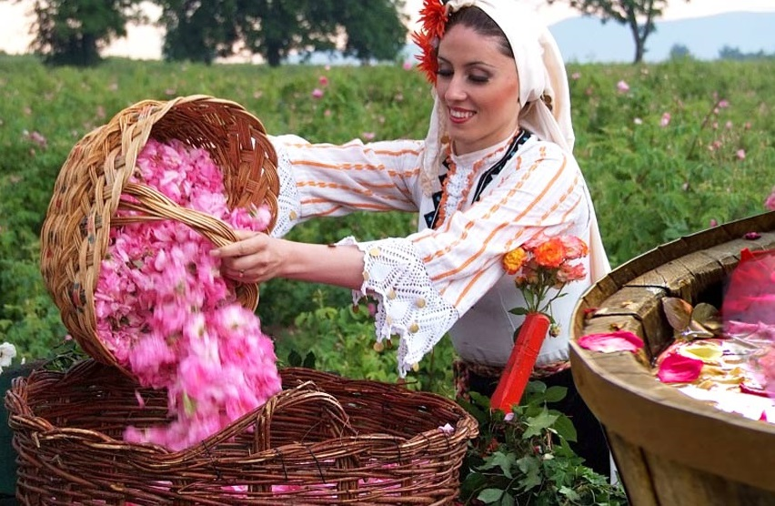 2> - You probably already know that the highest quality essential oils come from the small country of Bulgaria.The favorable climate and the clean air and soil of the famous Rose Valley in Bulgaria make the flowers and herbs grown there, vastly superior for essential oils production.
