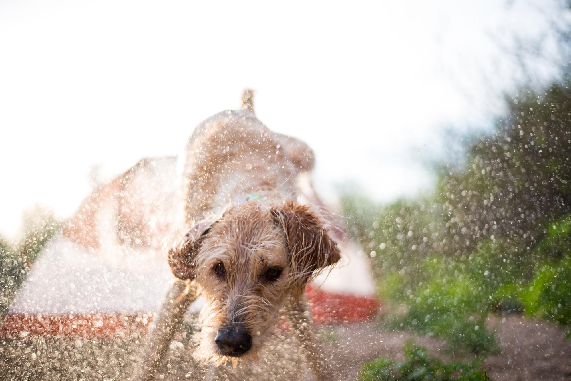 wet dog photo by weston carls.jpg