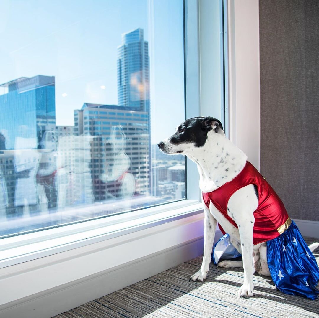 dog photography by weston carls.jpg