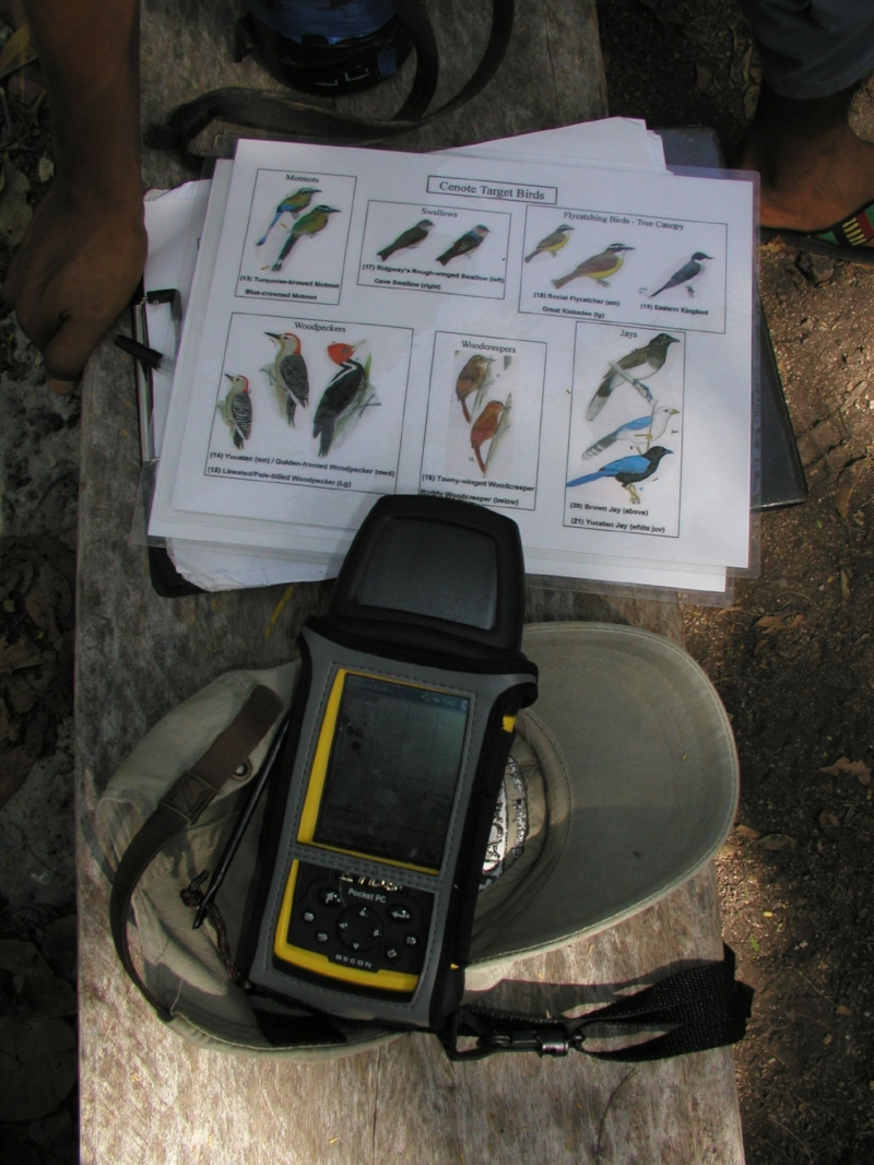 Here we used the RECON to do a census of bird species in the cenotes of the Ponderosa cave system.