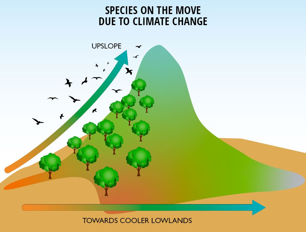 Possible species responses to increasing temperatures under climate change.