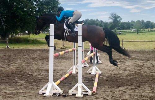 Horses For Sale — Acorn Hill Farm