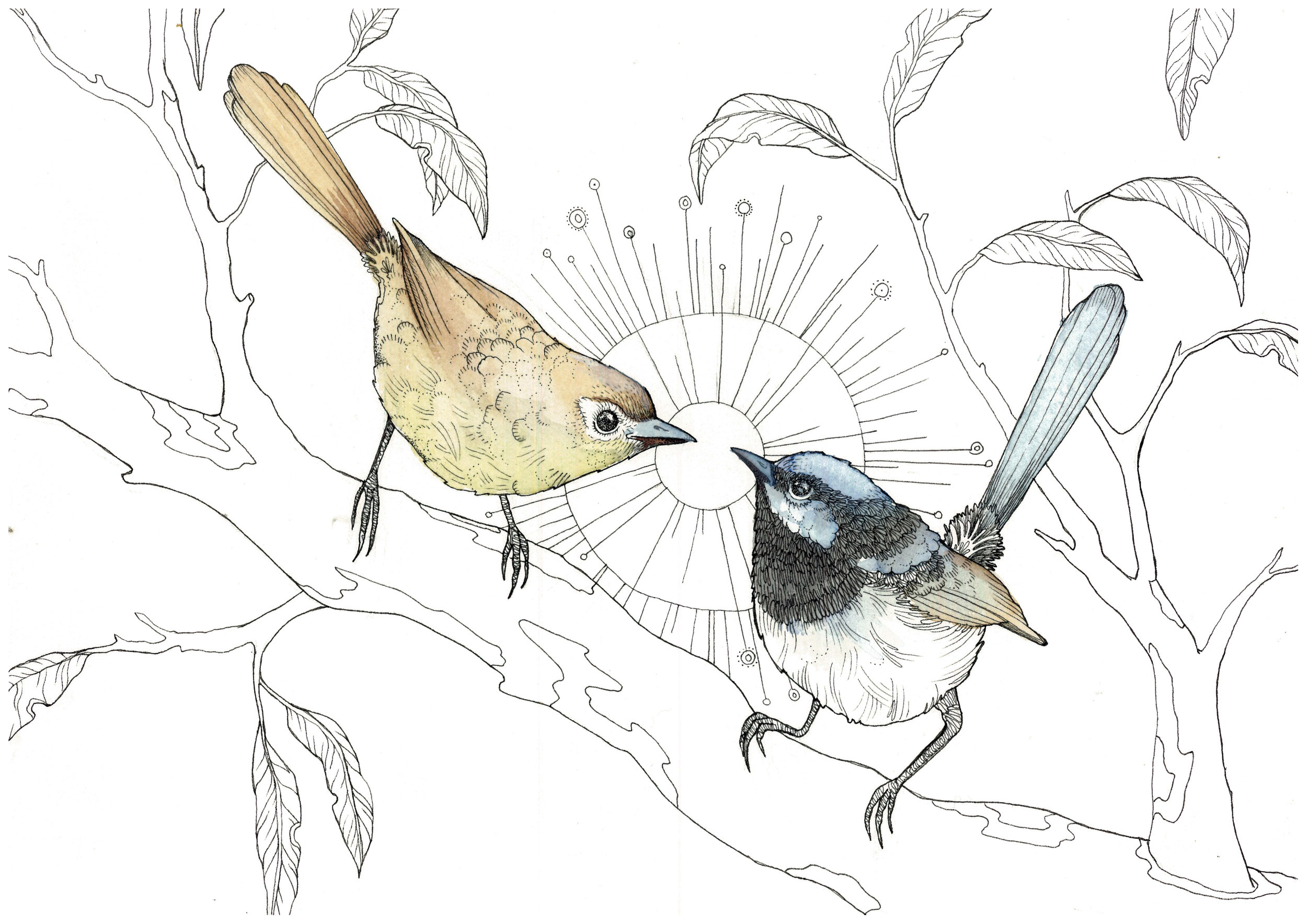 Fairy Wrens 2017 Watercolour and Ink on 100% cotton paper