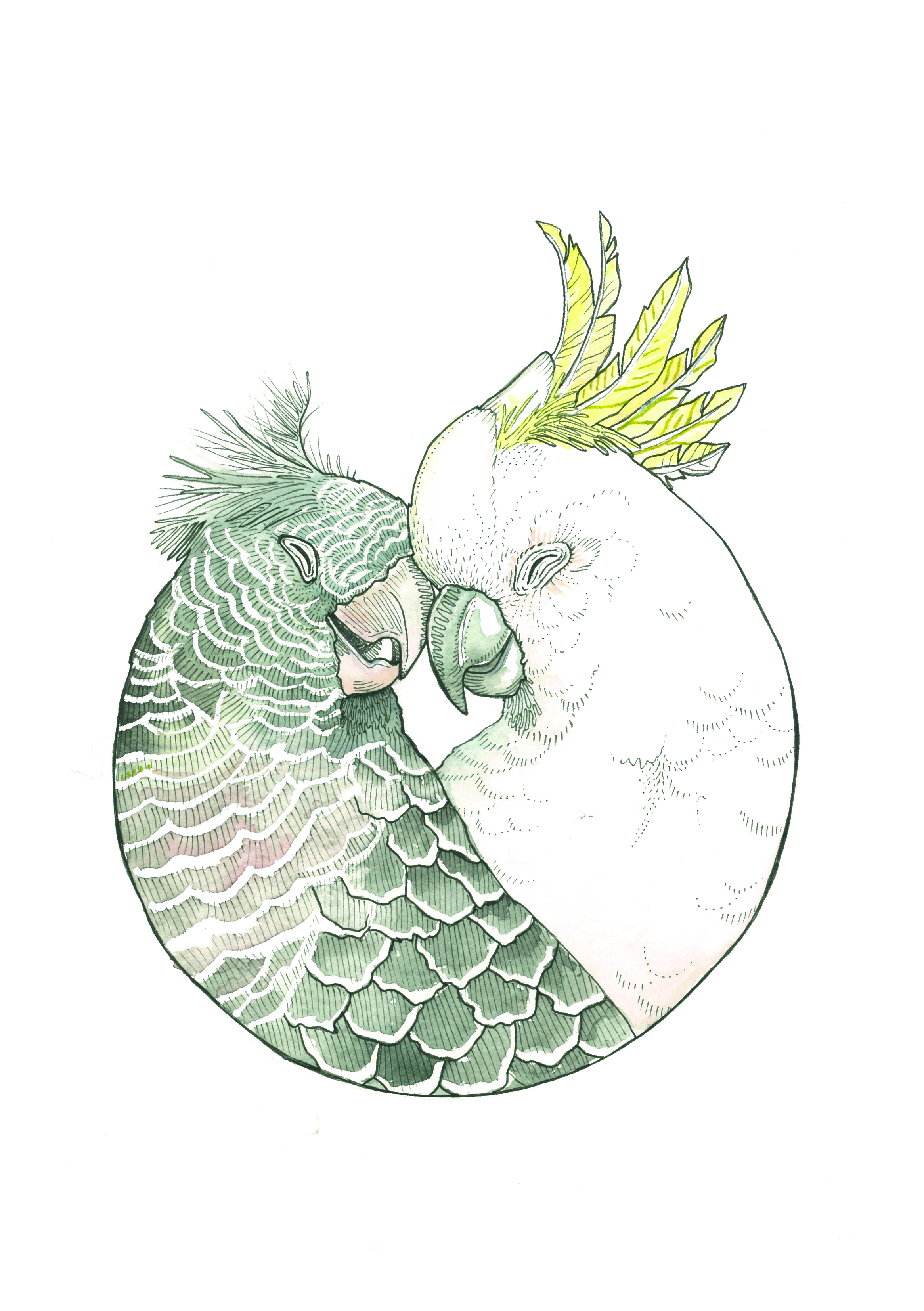 Cockatoo Cuddles 2016 Watercolour and Ink on 100% cotton paper