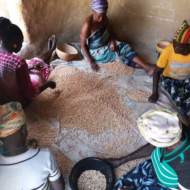 We got a fresh batch of bambara heading our way! Bambara grows just like a peanut with the hard, outer pod removed by hand and each seed inspected to ensure only the best beans make it through. Talk about quality control. #believeinbambara #femalefarmers #ruraldevelopment #coolbeans