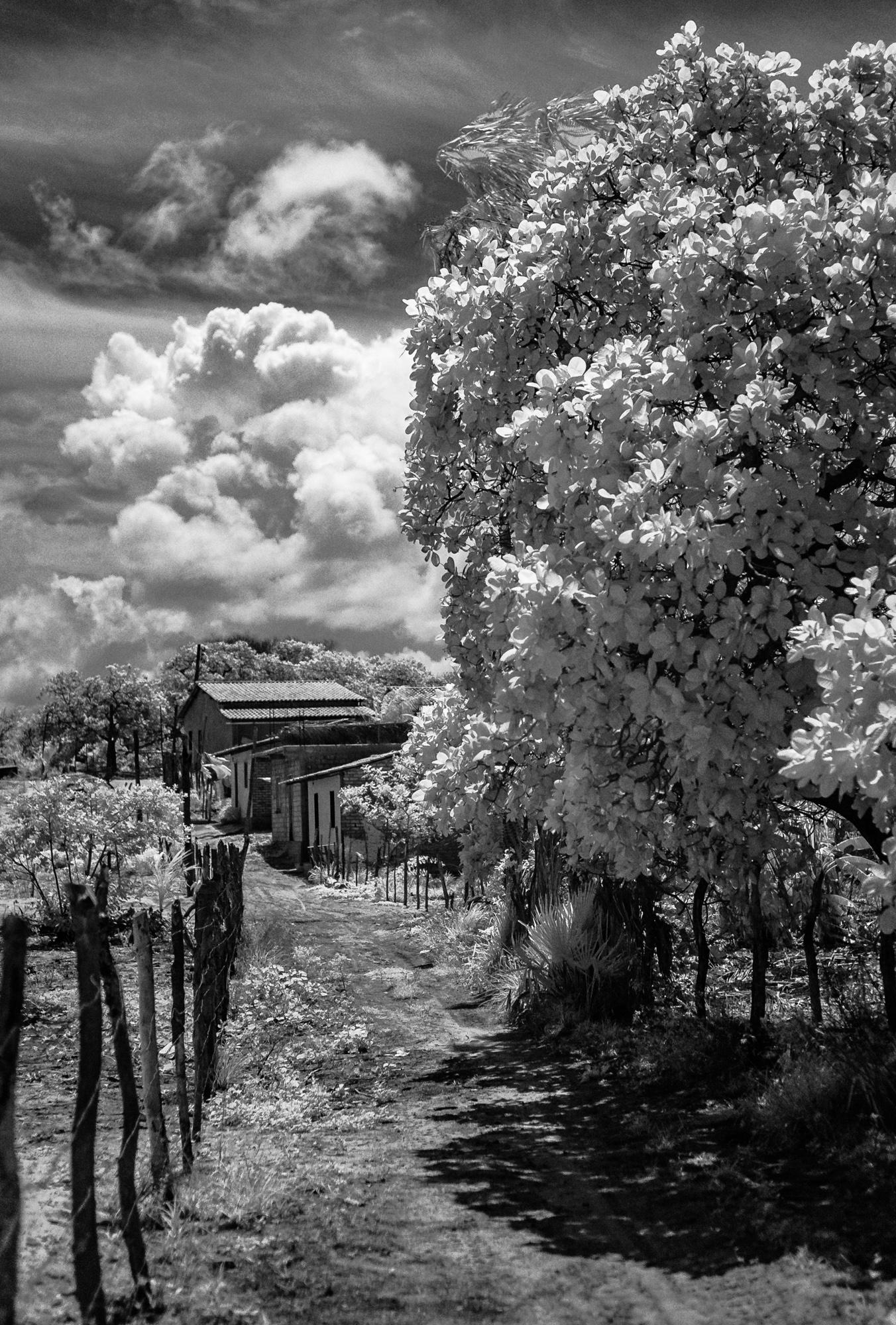 Scott_Myers_Brazil_Infrared-0962.jpg