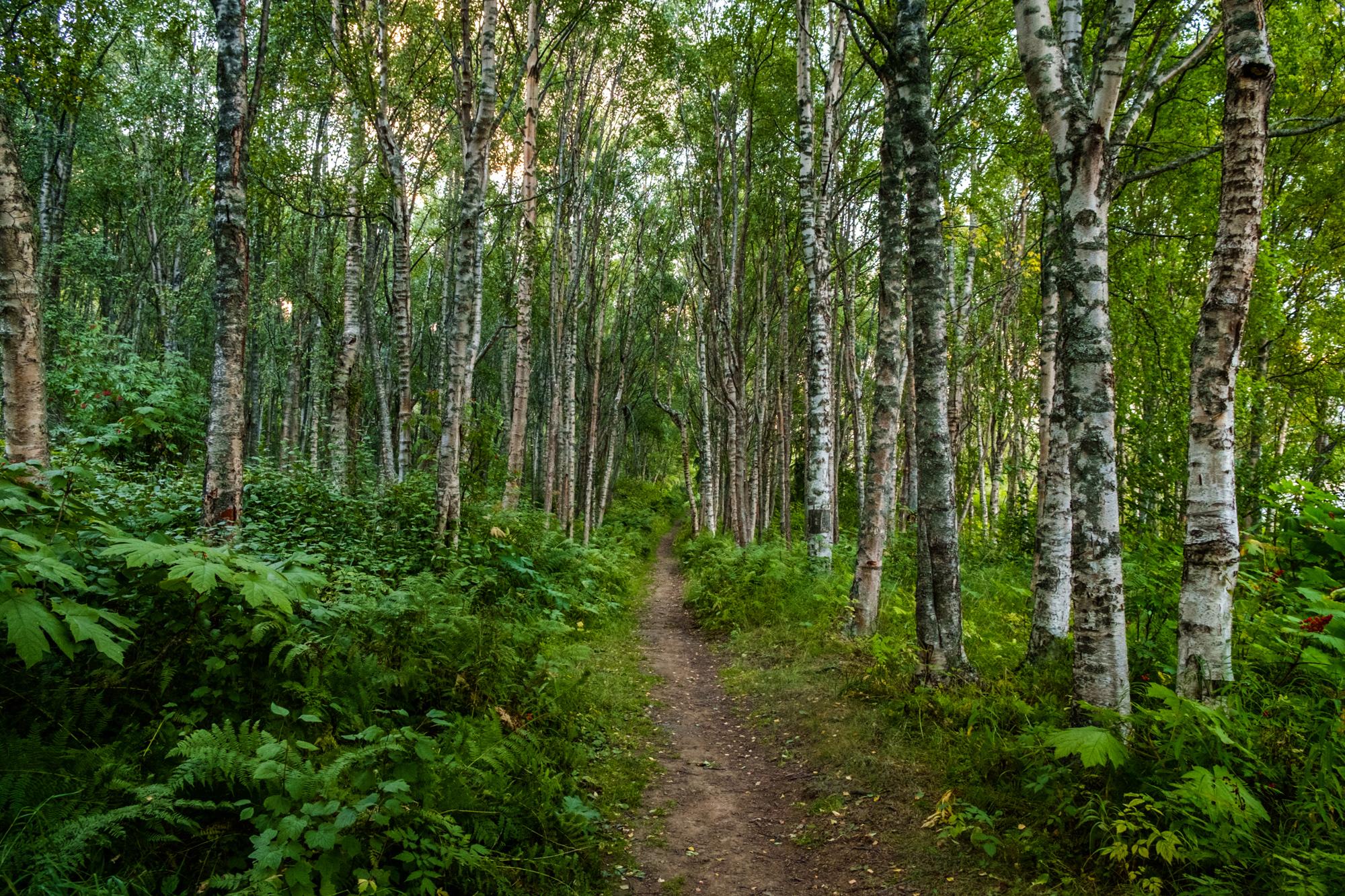 Scott_Myers_Alaska-3773.jpg