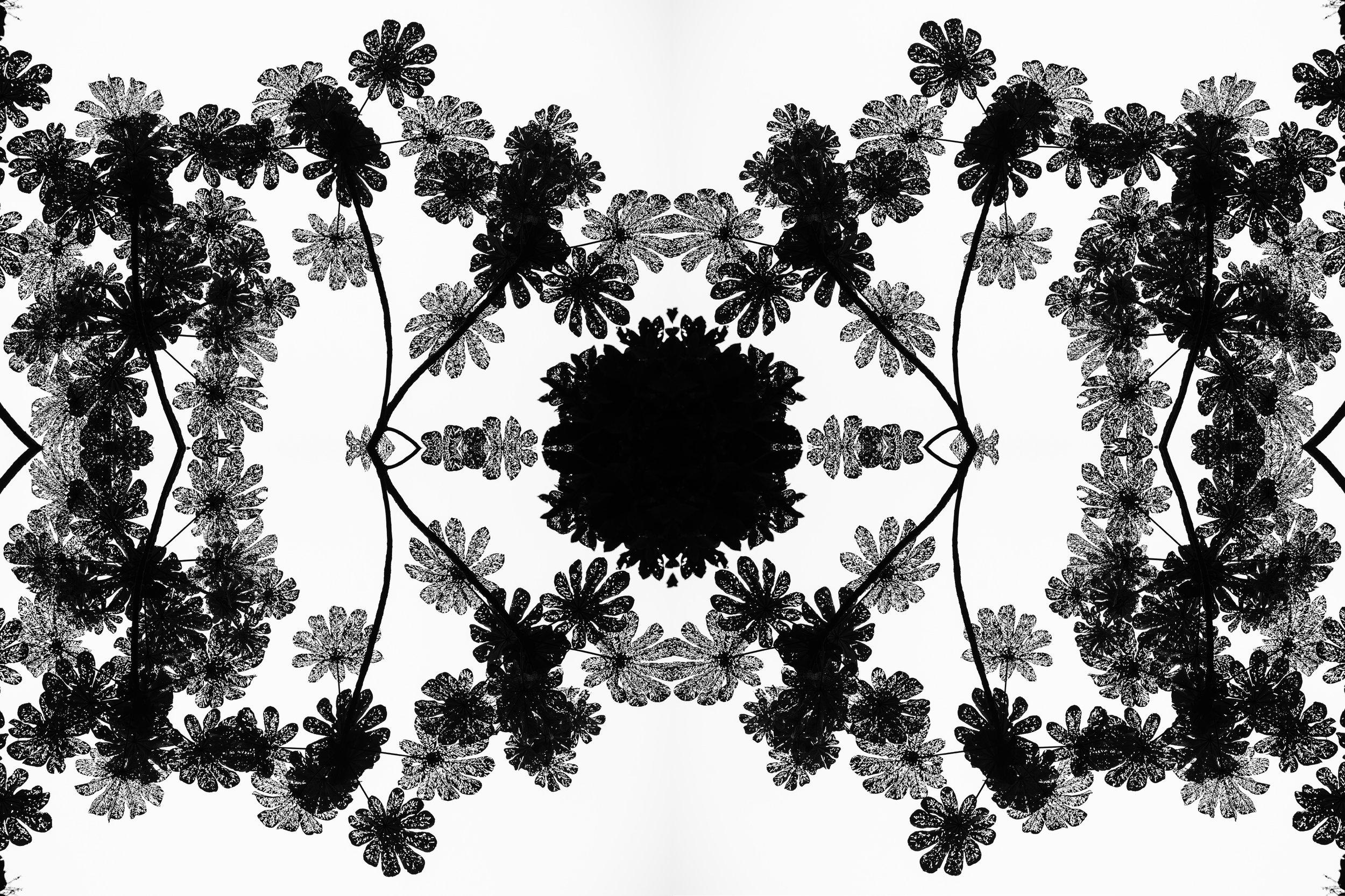 Flipped Leaves Experiment.jpg