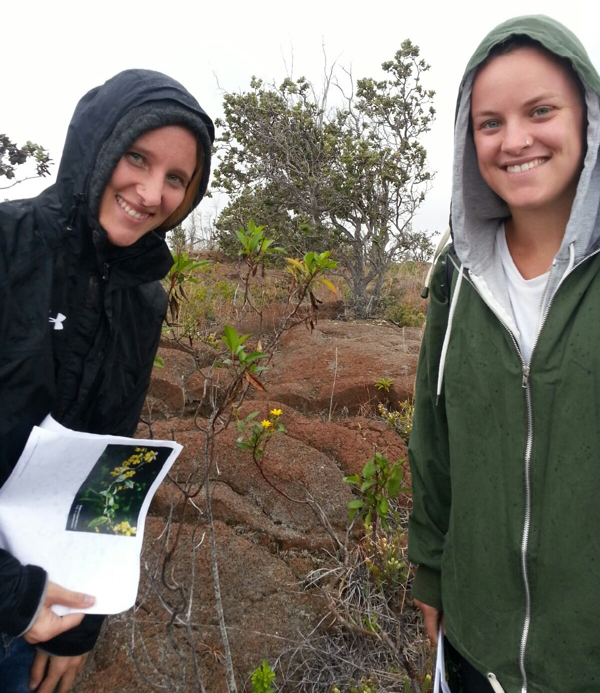 Kalya Clarke and Fiona Metcalfe (a visiting exchange student from the University of Stirling, Scotland) correctly identify a  Bidens hawaiiensis  in Hawaii Volcanoes National Park