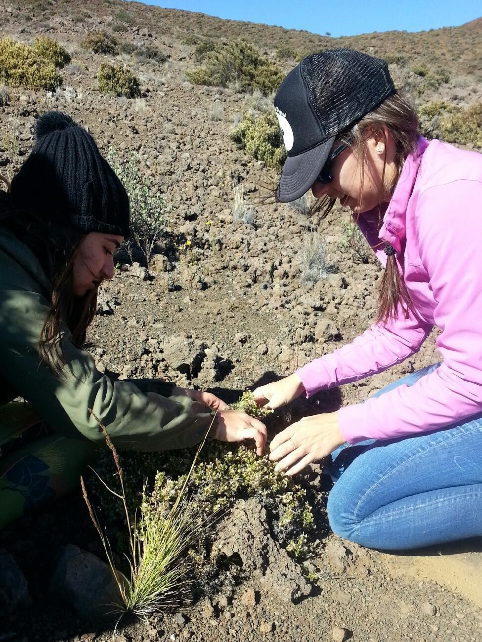 Kalena Spinola and Genevieve Blanchet collecting on Mauna Kea
