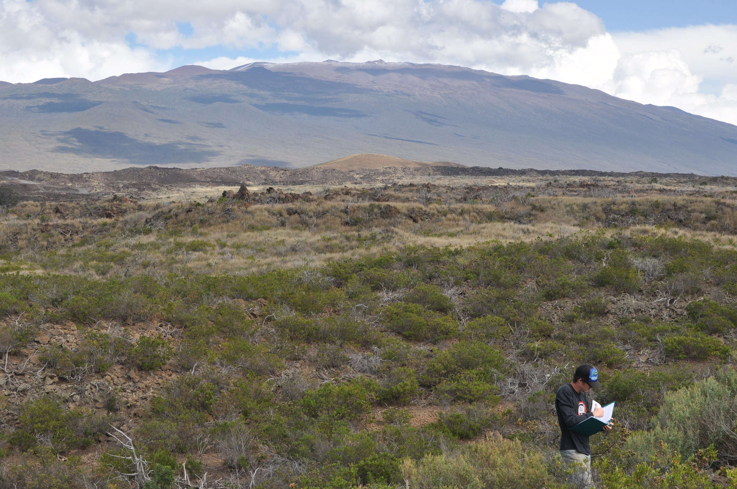 Jeff taking collection notes at PTA with Mauna Kea in the background.