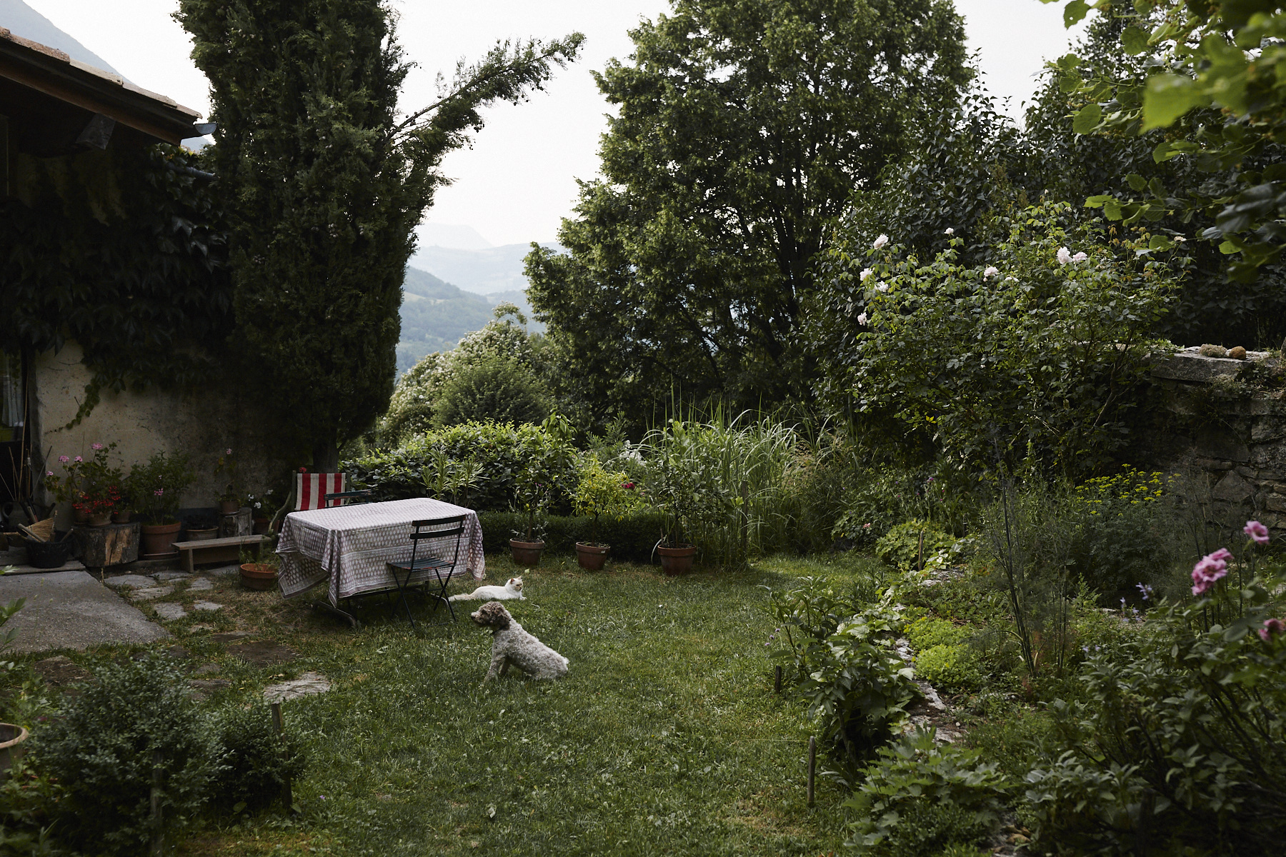 The garden and house in Vesc, Drôme, featuring Lili the cat and Mousse the dog ('Mousse' translates to 'Moss' in English).