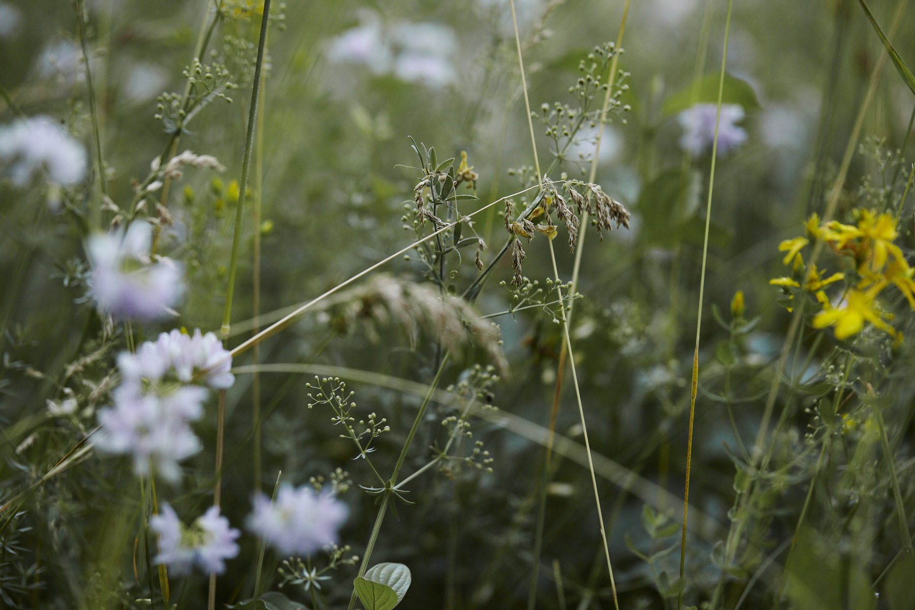 Detail of grasses and wildflowers in the garden.