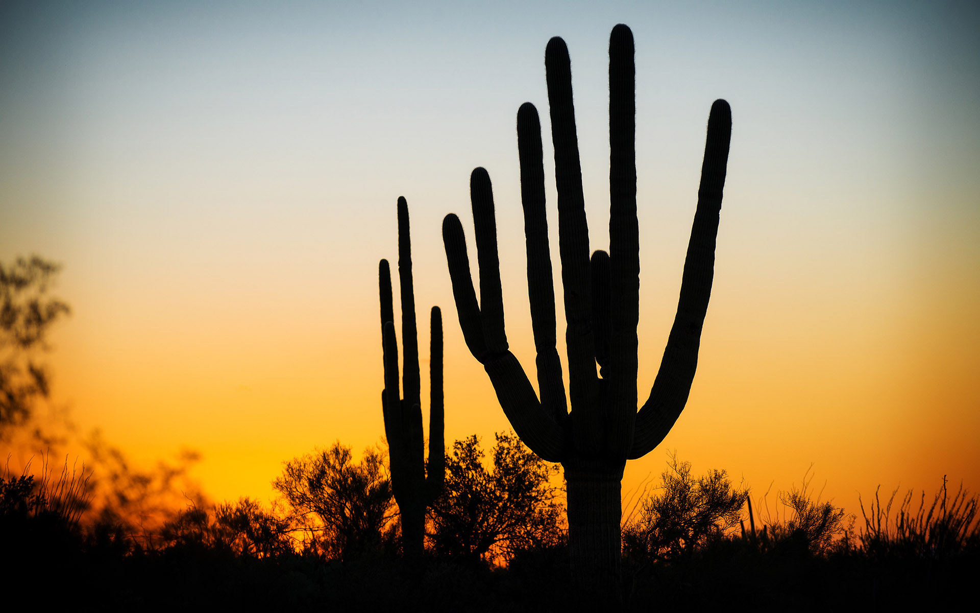 141010_TucsonAZ_PHP_1447WEB.jpg