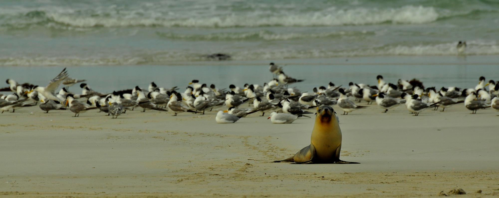 Kangaroo Island, Australia 2010 (M)