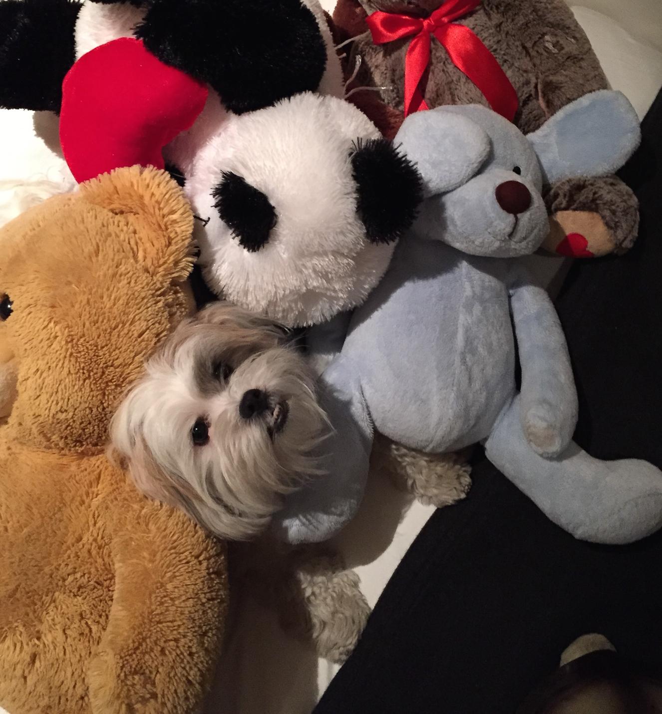 Where's Teddy? Manhattan, New York 2015 (M)
