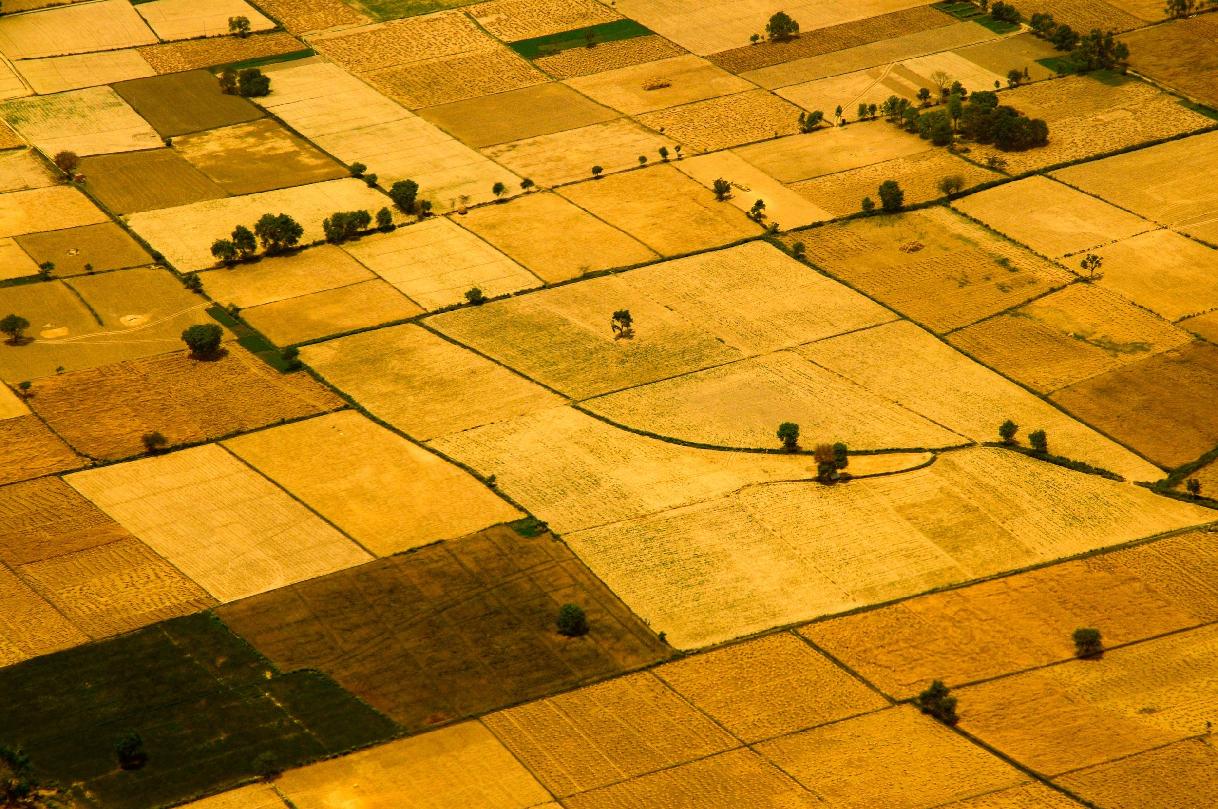 Golden Fields, Agra, India 2009