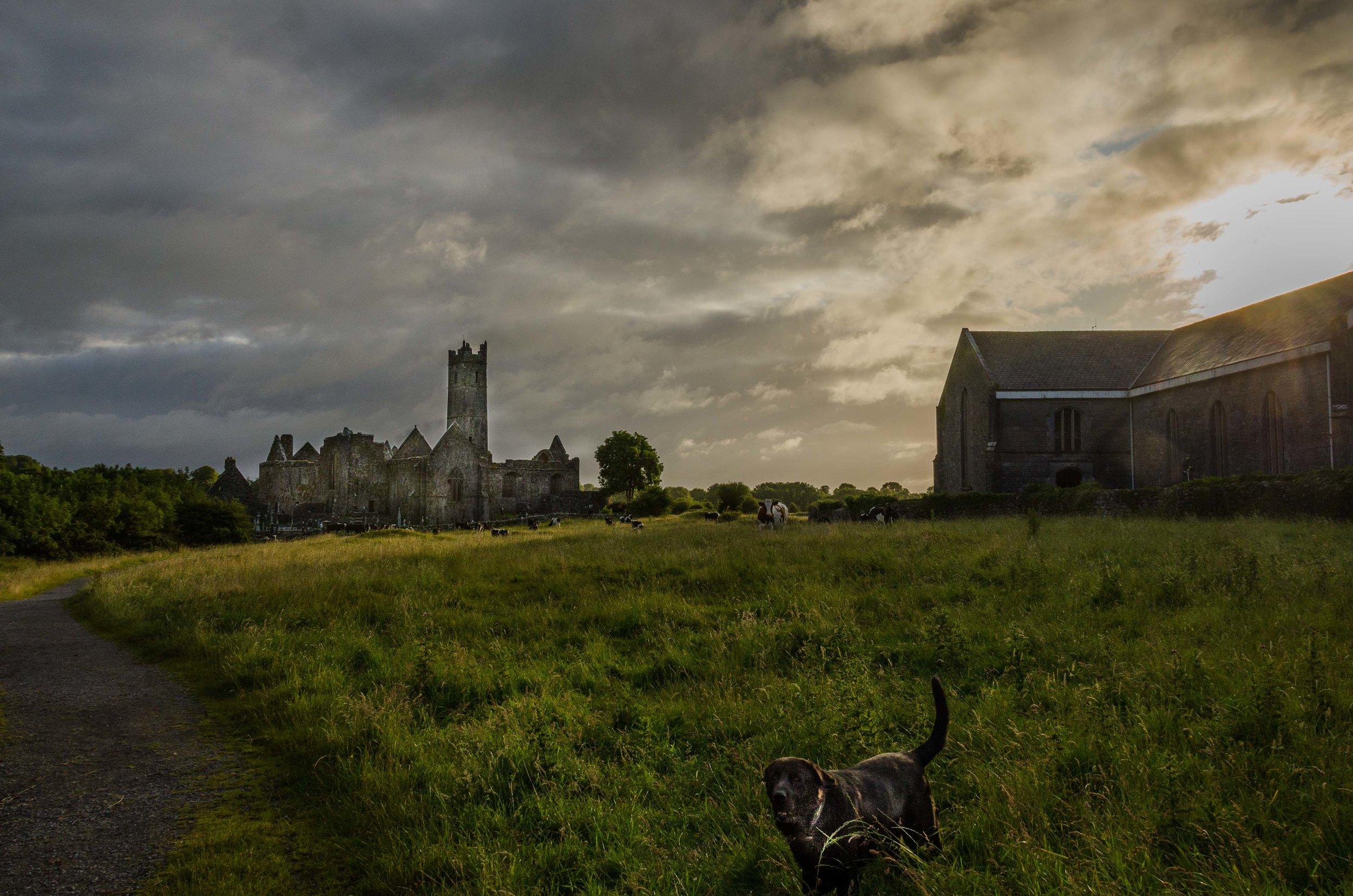 Quin Abbey County Clare, Ireland 2015