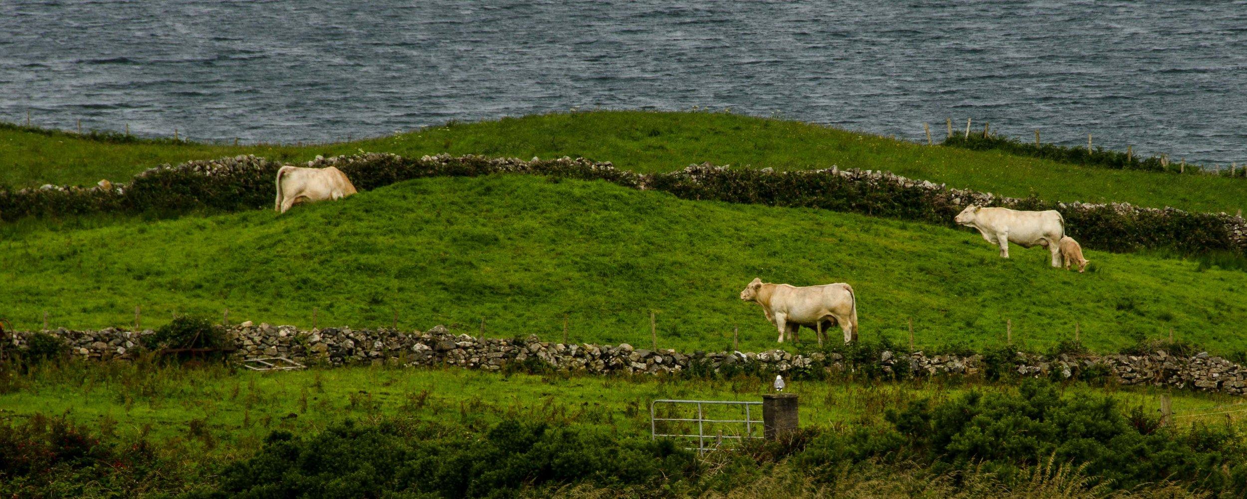 Connemara, Ireland 2015