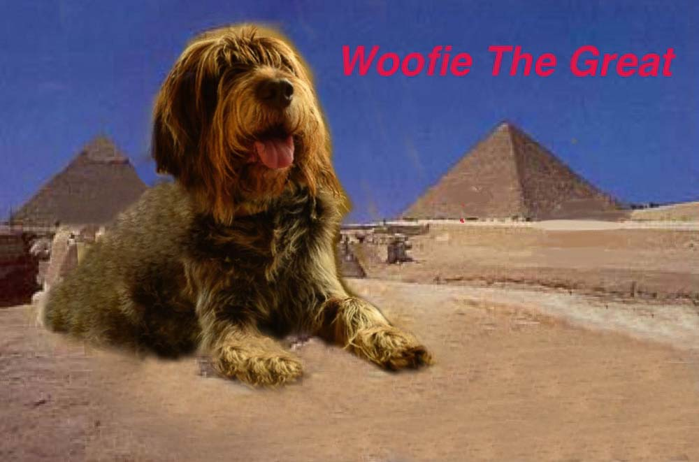 Woofie the Great. New York, NY