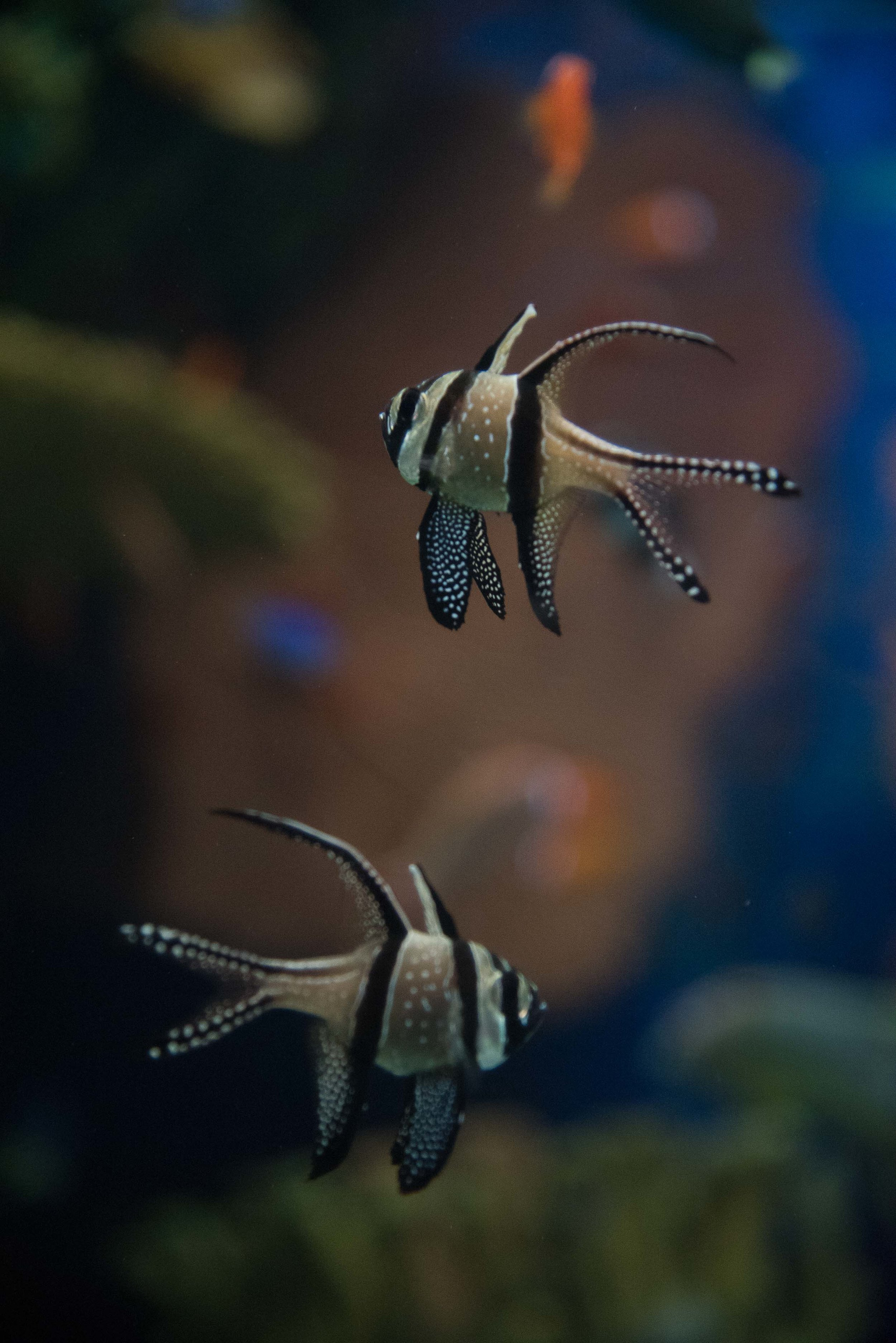 Shanghai Aquarium. Shanghai China. 2016