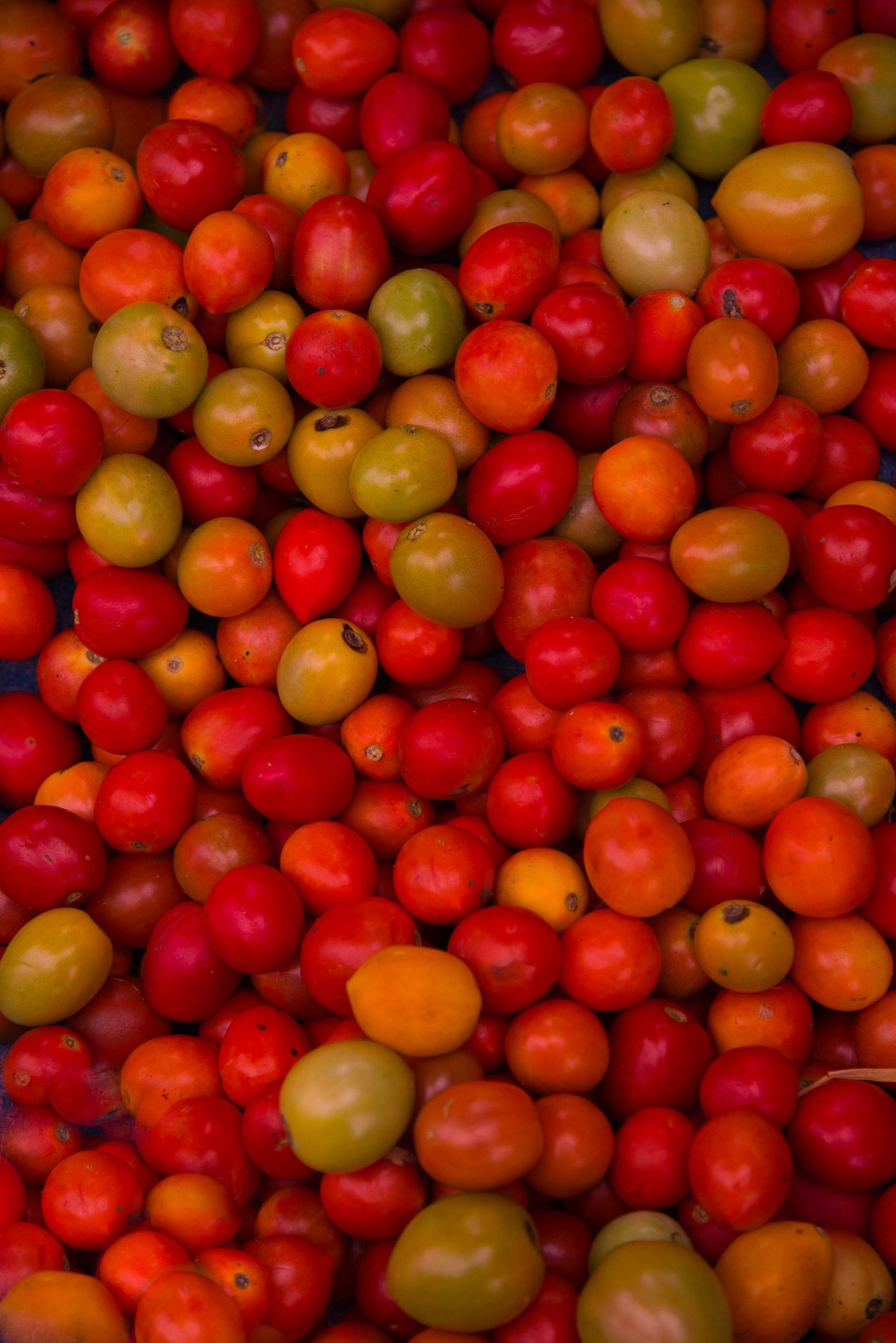 Cherry Tomatos.  Inle Lake, Myanmar 2015