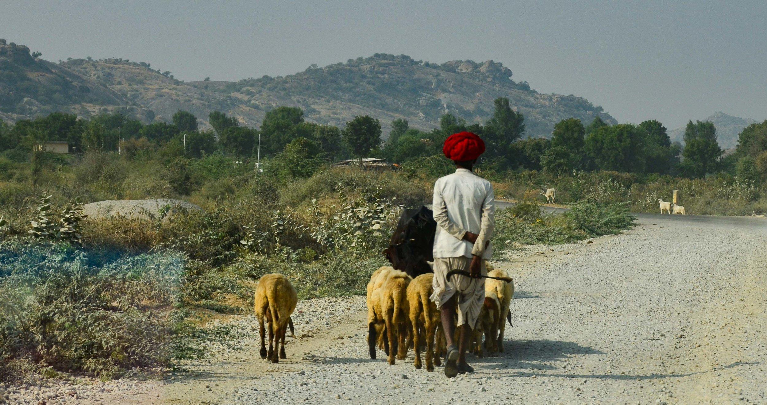 Red Turbin. jodhpur, India 2012