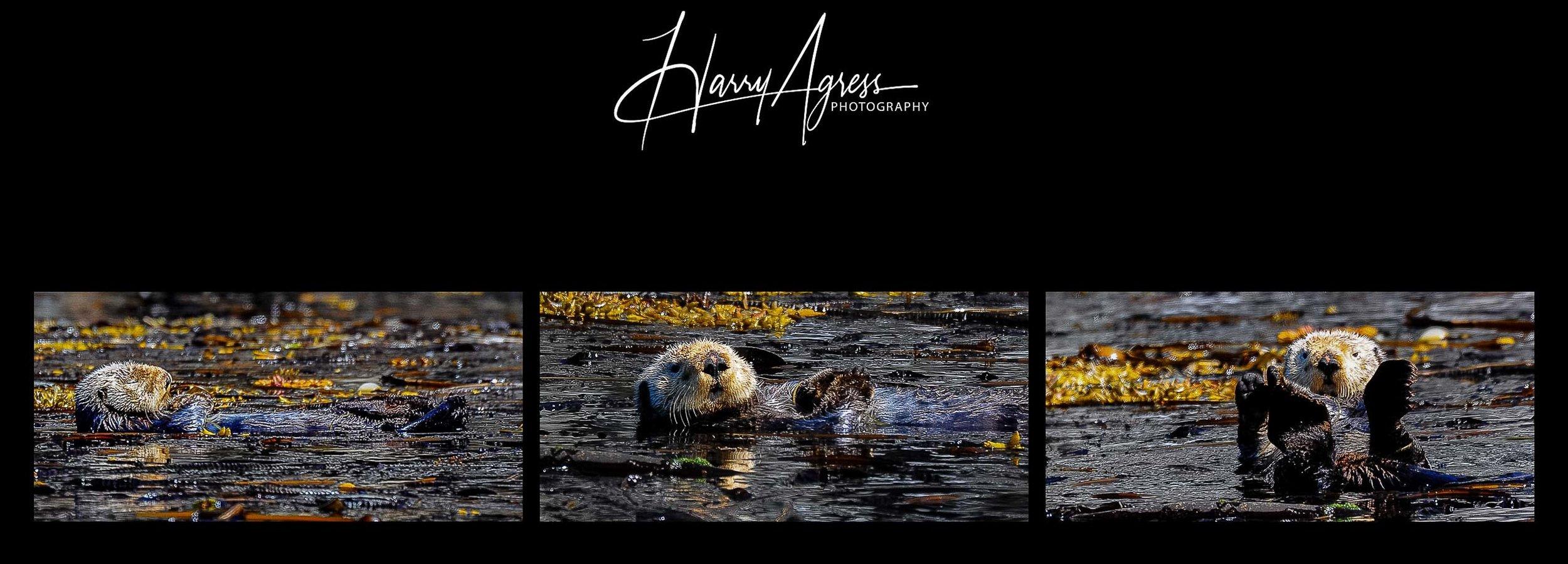 Otter Nap. Inside Passage, Alaska 2011