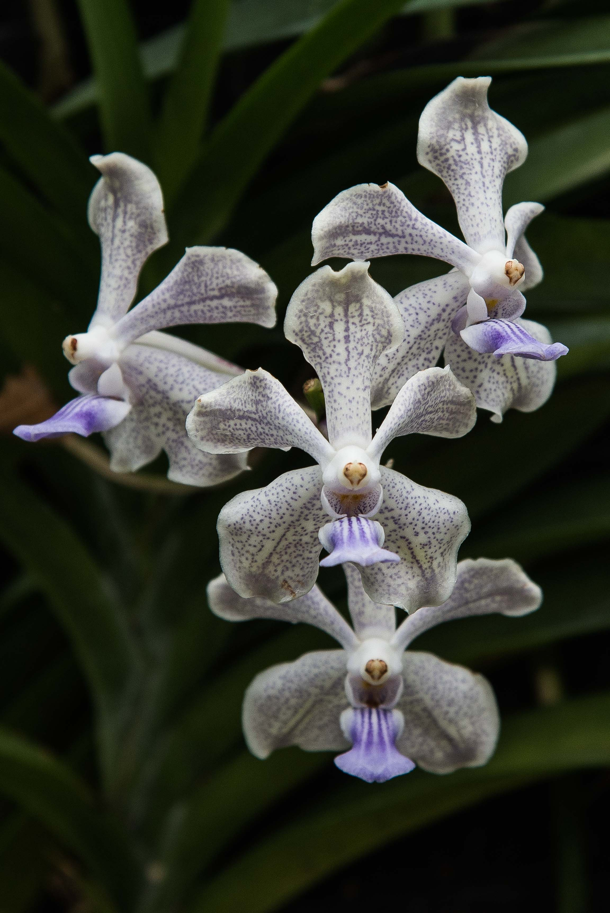 Orchid Garden, Singapore 2015