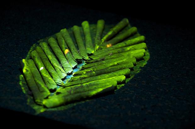 beedi_leaf