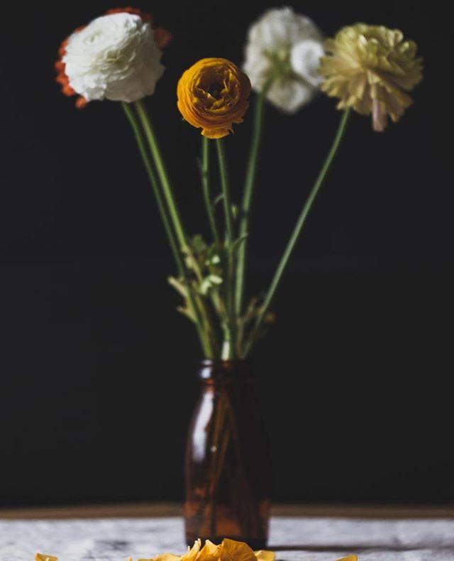 🥀Jeg har oppdatert nettbutikken min med disse bildene av Ranunkler, jeg ser de for meg printet stort midt på en stuevegg! ⠀ ⠀ #hverdag #frilanslivet #frilans #freelance #fotograf #profesjonellfotograf #selvstendignæringsdrivende #ambisiøsebloggere #gründer #freelance #freelancephotographer #photographer #litenbedrift #egenbedrift #nettbutikk #egennettbutikk #kunst #kunstpåveggen #artprint #kunstprint #blomster #snittblomster #ranunkler #flowers #flowersofinstagram #interiør #professionalphotographer #lifeofaphotographer ⠀