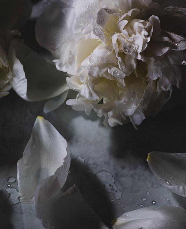 Peoner 🌺⠀ ⠀ #hverdag #frilanslivet #frilans #freelance #fotograf #profesjonellfotograf #selvstendignæringsdrivende #ambisiøsebloggere #gründer #freelance #freelancephotographer #photographer #litenbedrift #egenbedrift #nettbutikk #egennettbutikk #kunst #kunstpåveggen #artprint #kunstprint #blomster #snittblomster #peoner #peonies #flowers #flowersofinstagram #interiør #professionalphotographer #lifeofaphotographer ⠀ ⠀ ⠀ ⠀ ⠀