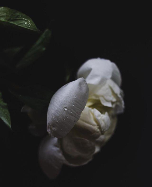 Halvdøde blomster er ofte de vakreste synes jeg 🥀🥰⠀ ⠀ #hverdag #frilanslivet #frilans #freelance #fotograf #profesjonellfotograf #selvstendignæringsdrivende #ambisiøsebloggere #gründer #freelance #freelancephotographer #photographer #litenbedrift #egenbedrift #nettbutikk #egennettbutikk #kunst #kunstpåveggen #artprint #kunstprint #blomster #snittblomster #peoner #peonies #flowers #flowersofinstagram #interiør #professionalphotographer #lifeofaphotographer ⠀ ⠀ ⠀ ⠀ ⠀
