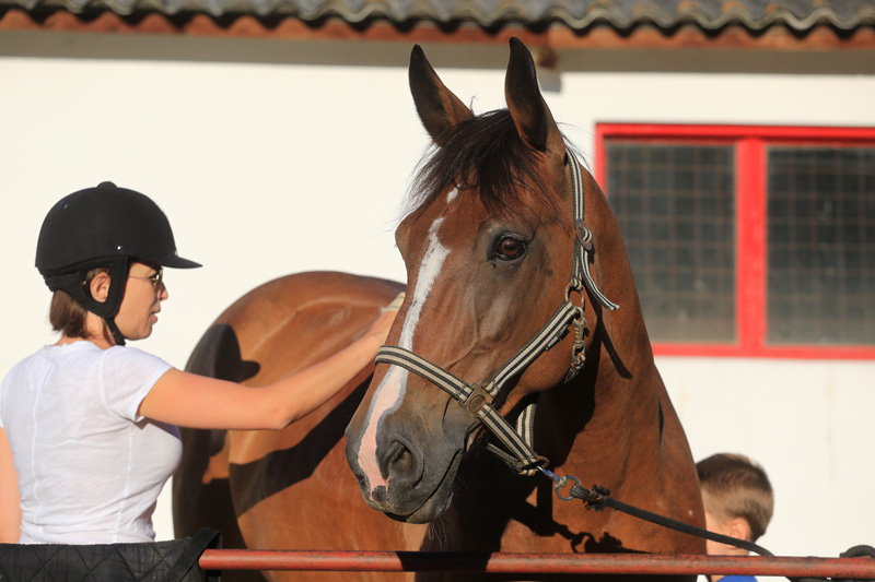 Malga  all round horse/favourite horse for beginners and medium riders. can please any expectation!