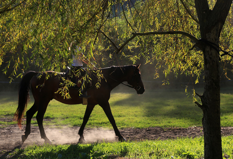 Rocky  Romanian sport horse, very sweet, with very comfortable canter.
